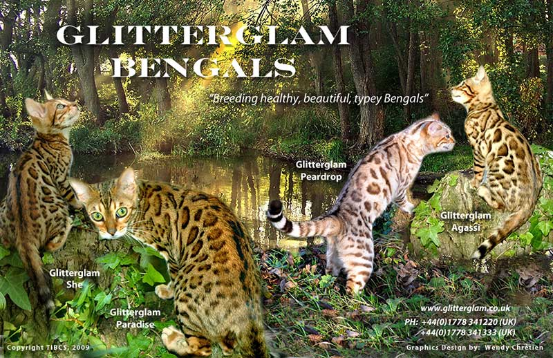Bengal kittens for sale in ct free