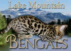 Picture of Bengal Cat - Lakemountain Bengals and Toygers